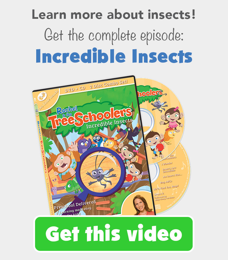 TreeSchooler Ep. 3 DVD: Incredible Insects